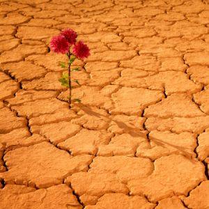Flower In The Desert